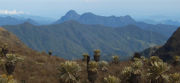 Image associated with Assessing Biodiversity Vulnerability in the Tropical Andes