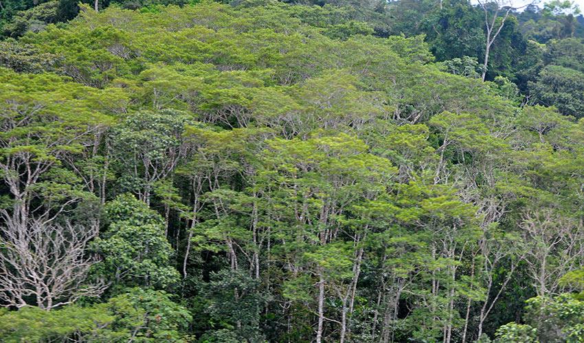 EcuadorColombiarainforest