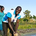 Stories of Impact from Lake Victoria Basin thumbnail