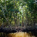 Mangrove Alliance Website Launched as Resource for Preservation thumbnail